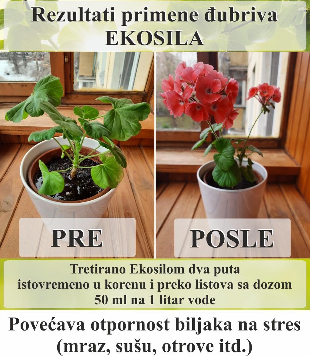 Rerultati primene Ekosila u cvevce